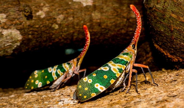 Two Green Yellow Orange Insect