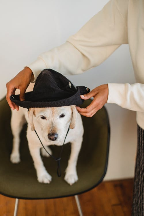 Ethnic woman putting hat on head of dog on stool