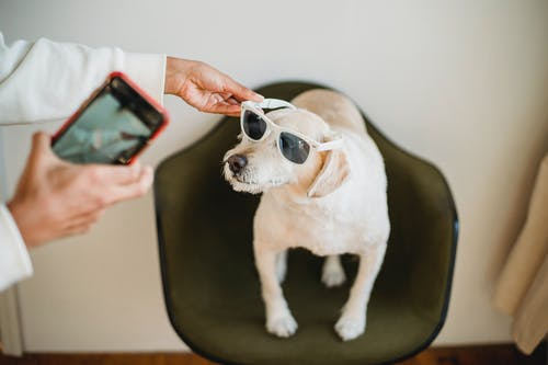Pemilik Etnis Dengan Ponsel Pintar Mengenakan Kacamata Hitam Pada Anak Anjing