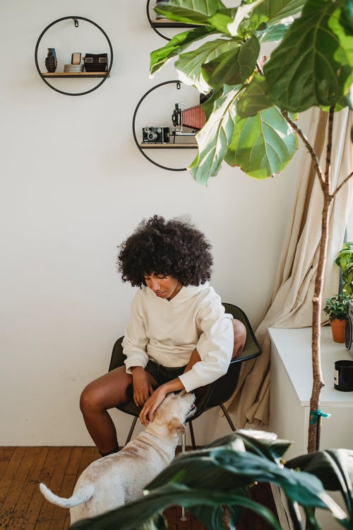 Black woman caressing dog at apartment with modern interior