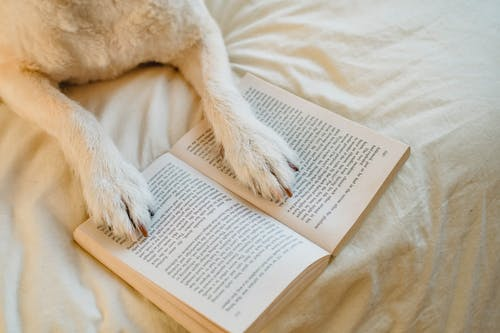 From above cute dog with white fur resting on comfy bed with paws on opened book in light bedroom