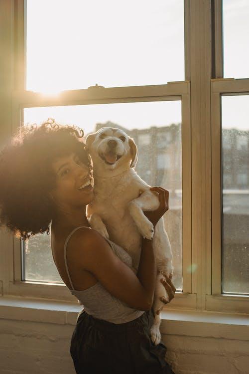 Happy black woman holding cute Labrador on hands near window