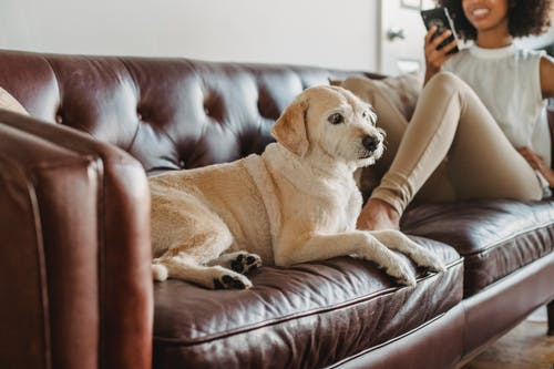 Dog resting on couch near crop black woman with smartphone