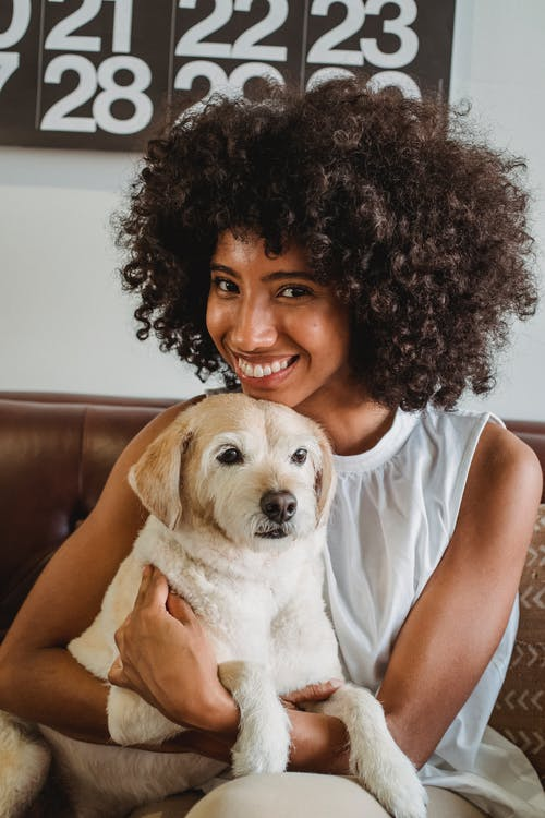 Young content ethnic female with Afro hairstyle embracing cute purebred dog on couch in house while looking at camera