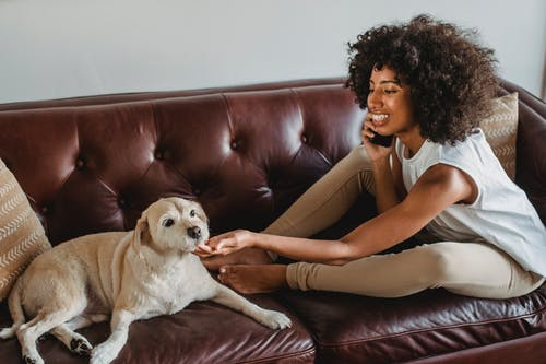 Side view of young cheerful African American female conversing on cellphone while caressing dog on leather couch at home