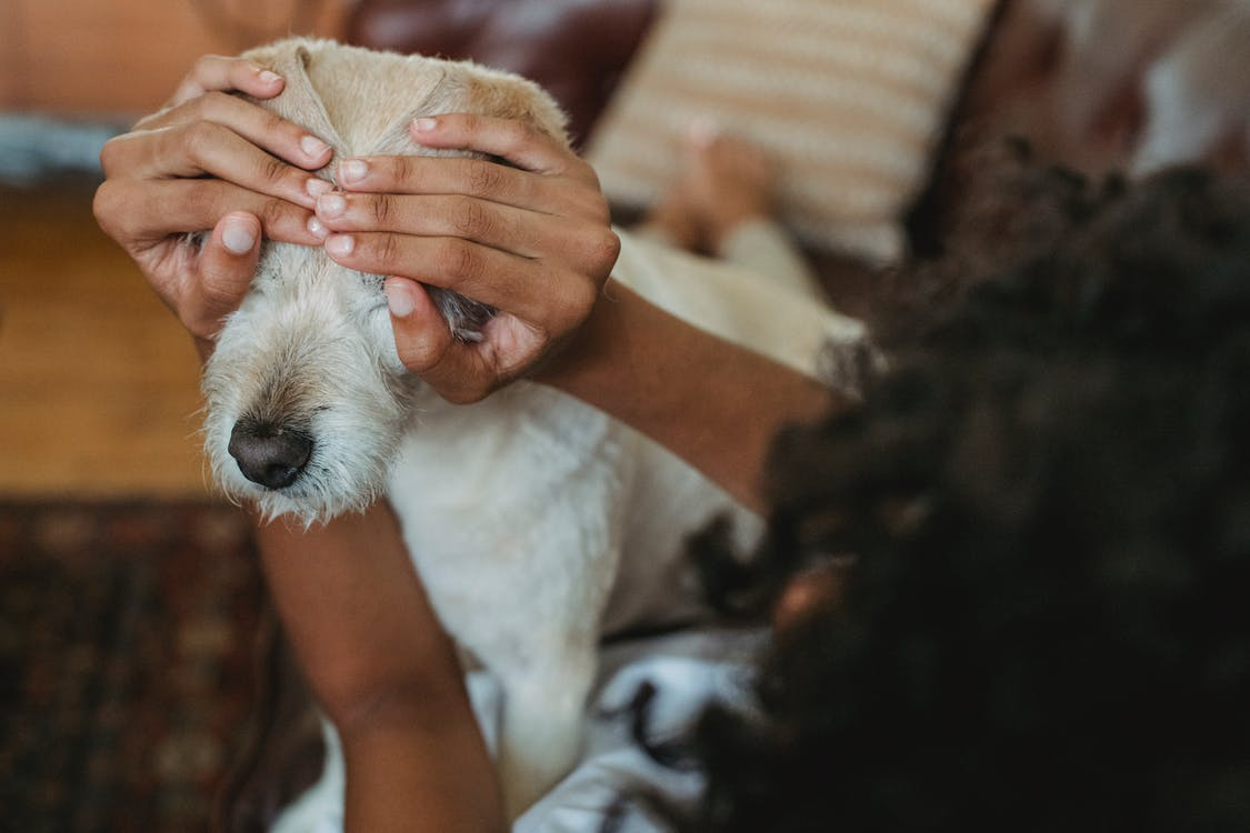 Faceless black woman covering eyes to dog on couch