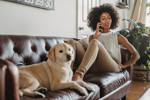 Full body of African American female owner having conversation on mobile phone while resting on couch with Labrador Retriever