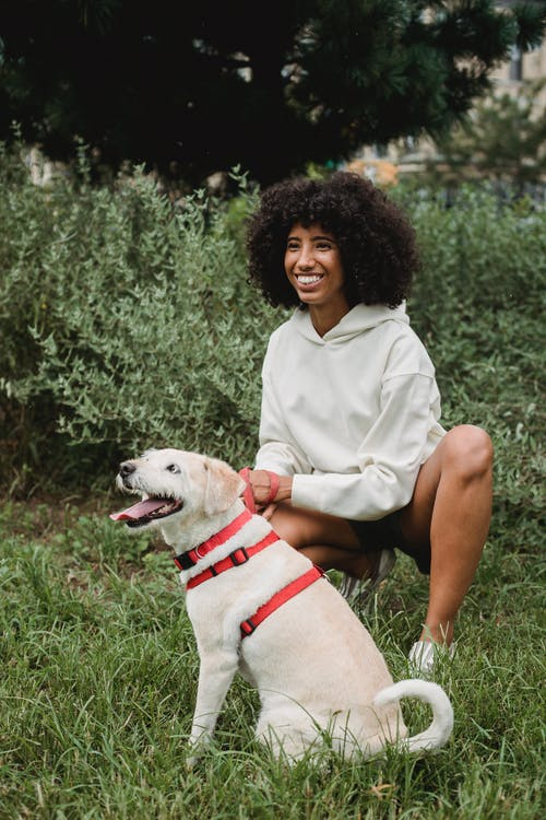 Full body of positive African American female owner sitting near dog Labrador Retriever in green park