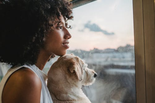Positive black woman looking at window with purebred dogs