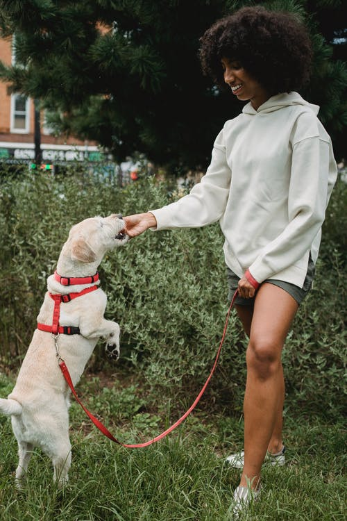 Black woman feeding dog standing on hind legs in park