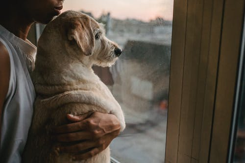 Side view of crop anonymous African American female owner hugging gently Labrador Retriever while standing near window