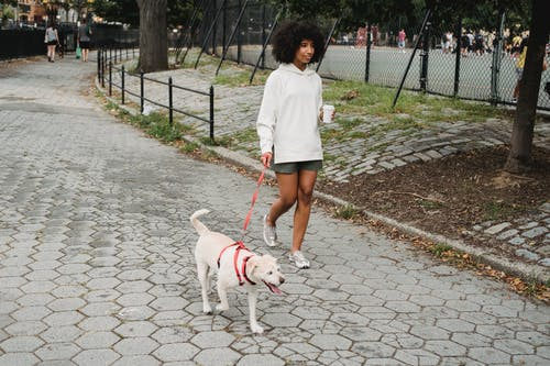 Woman Holding Coffee And Walking With Purebred Dog In The Park