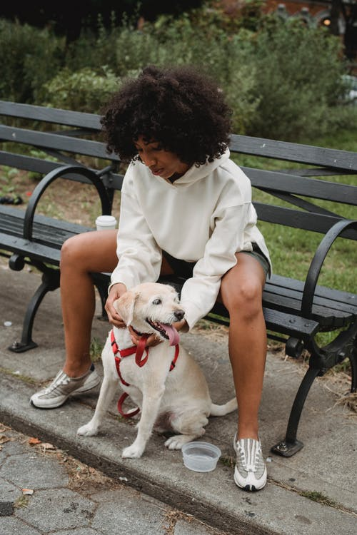 Black woman sitting on bench and stroking purebred dog