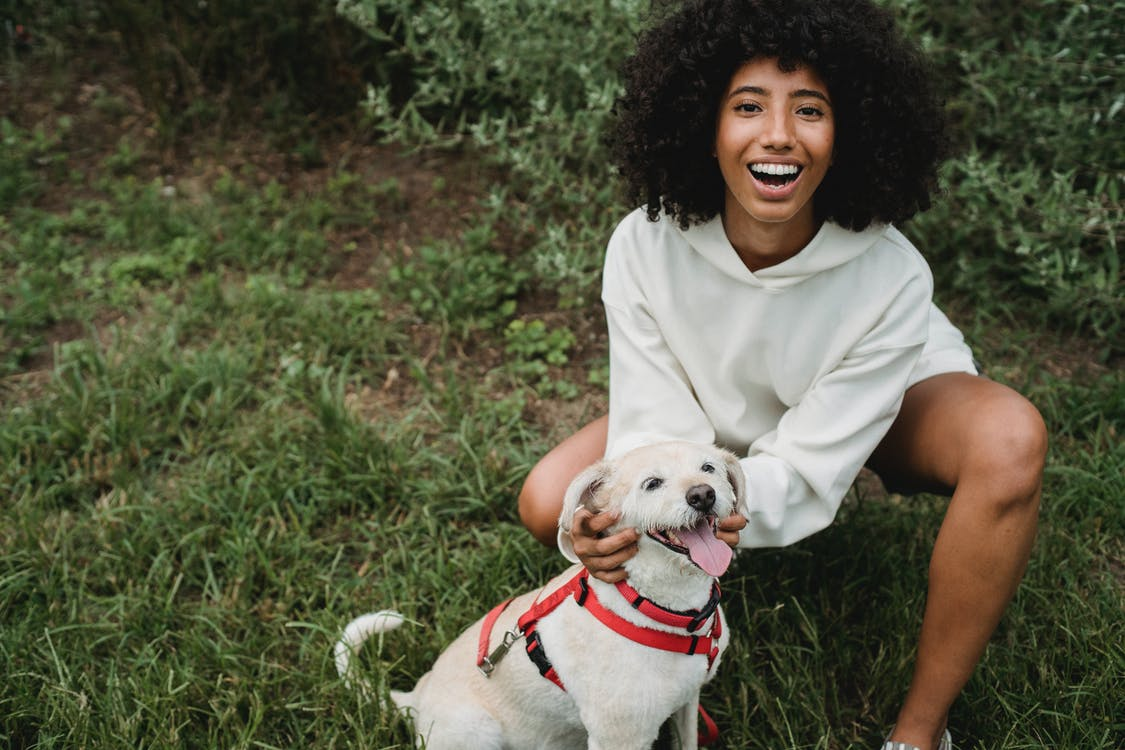 High angle of crop delighted African American female owner smiling happily while caressing Labrador Retriever in lawn