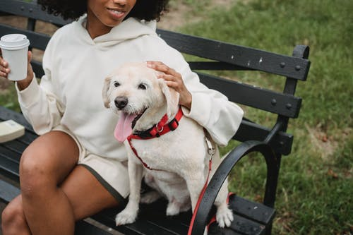 Cheerful unrecognizable African American female sitting on bench with dog with crossed legs and cup of takeaway coffee in city