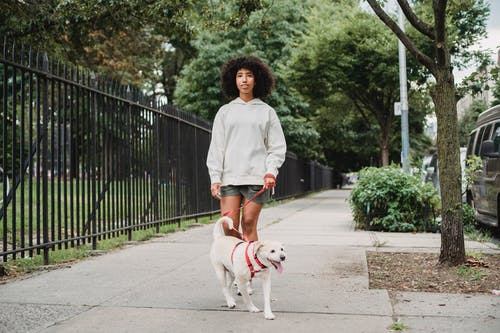 Content African American female owner walking dog on red leash and looking away while strolling on pathway along black barrier in street with trees