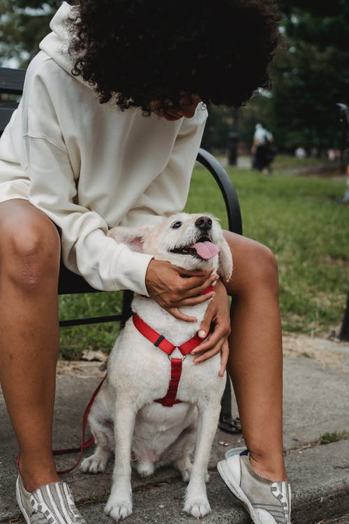 Unrecognizable black woman stroking dog in park