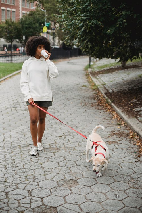 Full body of African American female with paper cup of hot drink walking on sidewalk with dog on leash in street