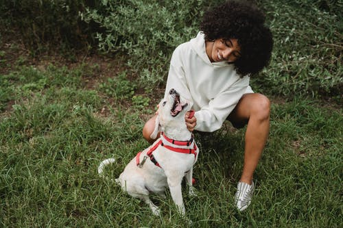 Full body of cheerful African American female stroking playful dog on red leash while squatting on grassy lawn in street