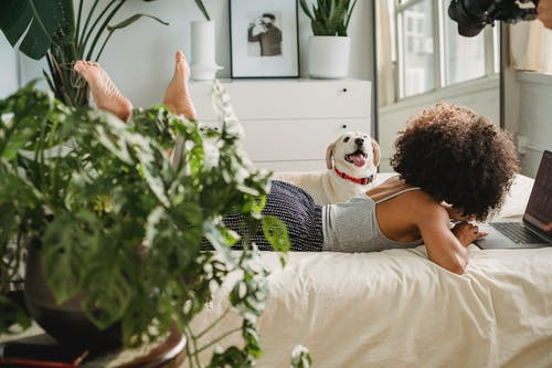 Unrecognizable black woman with dog and laptop on bed