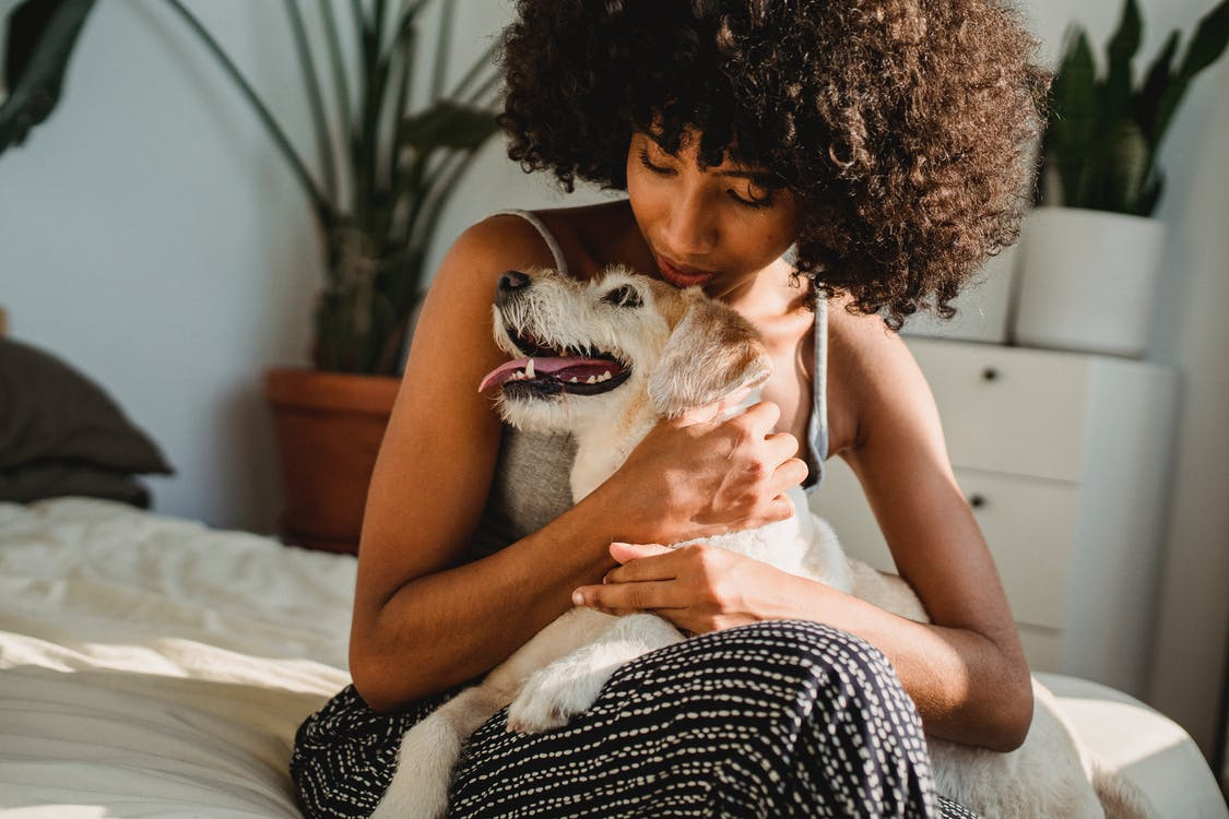 Crop black woman caressing dog on bed in sunlight