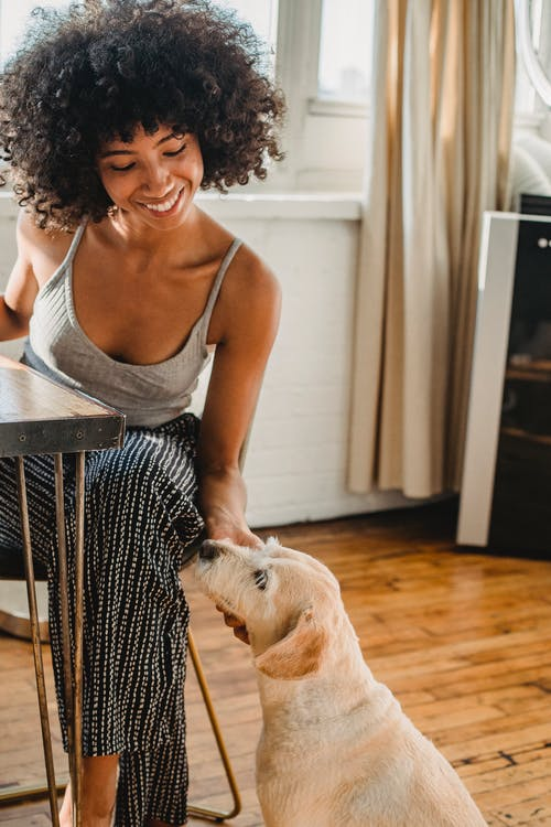 Young happy ethnic female with Afro hairstyle caressing purebred dog resting on wooden floor in house