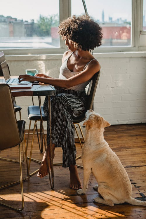 Black female freelancer typing on laptop near dog at home