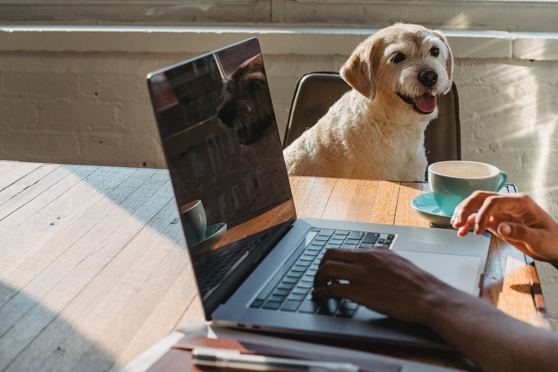 Crop anonymous young African American female freelancer using netbook and drinking coffee while sitting at table near dog