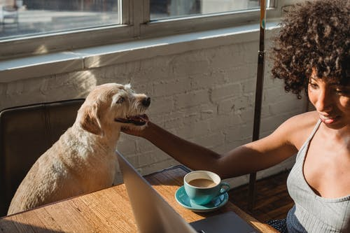 Young black female freelancer sitting at table with netbook and petting dog while drinking coffee in room