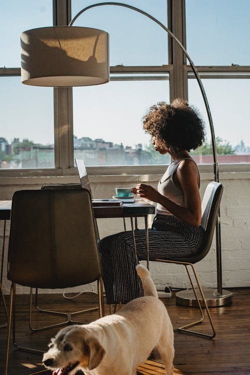 Young African American woman working remotely at table on computer with cup of coffee and dog in cozy apartment in daylight