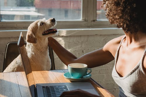 Faceless young black woman sitting at table and working remotely on computer with cup of coffee while petting dog in daylight at home