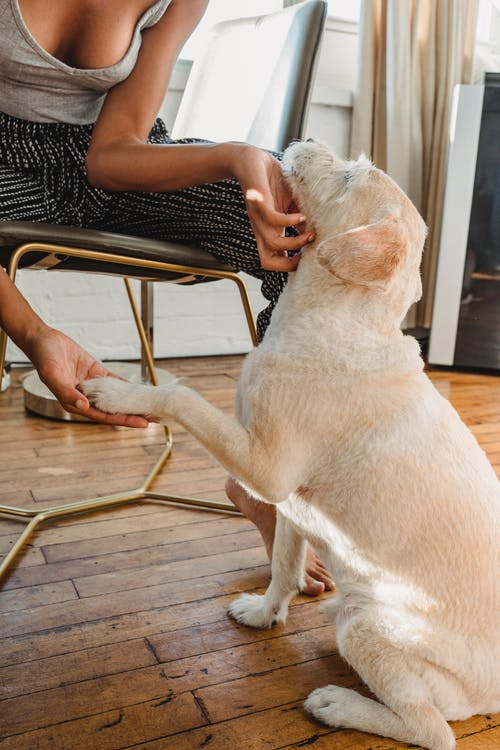 Unrecognizable crop barefoot African American female in casual clothes sitting on chair and stroking obedient dog in light room