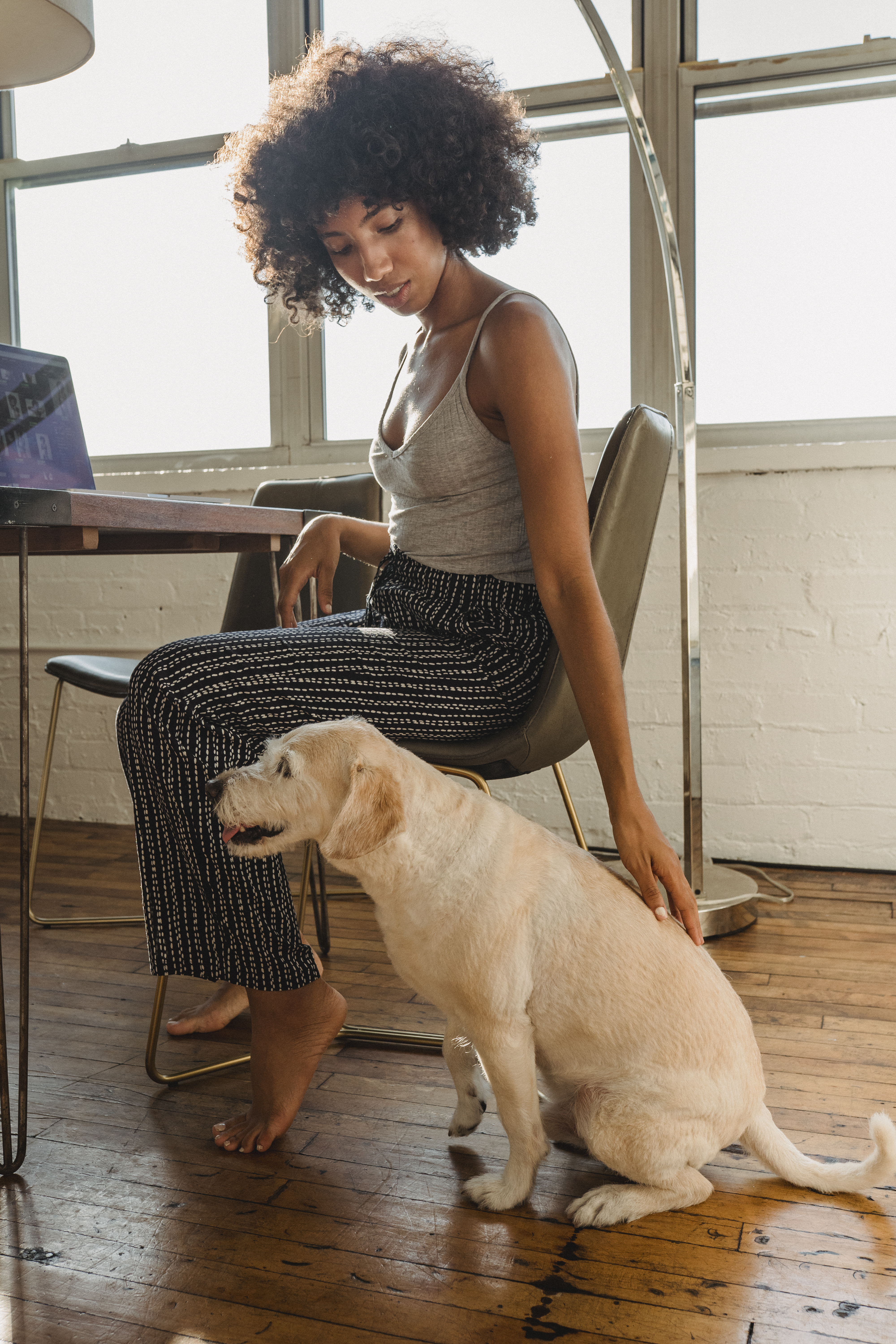 black female freelancer sitting with dog and computer at table