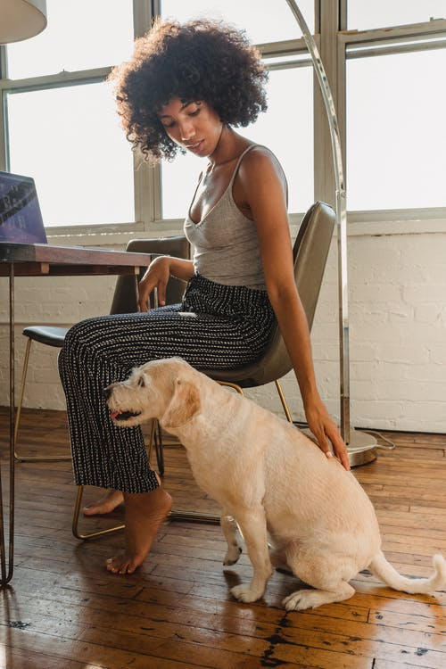 Young African American lady petting dog while sitting at table with netbook at home in daylight