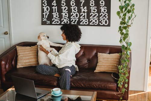 Happy black woman playing with dog on couch