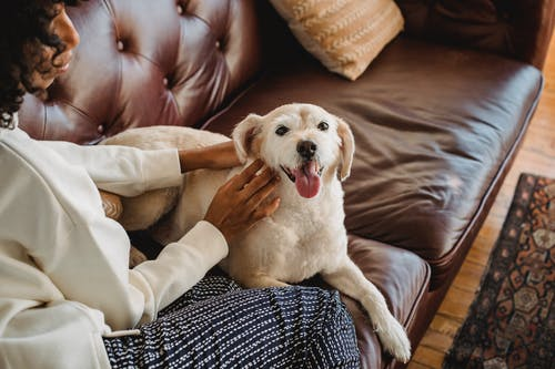 African American lady cuddling with dog on couch