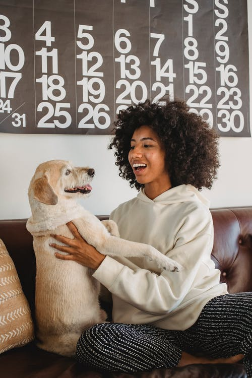 Smiling young black female in casual outfit hugging with dog while sitting on couch in room in daytime