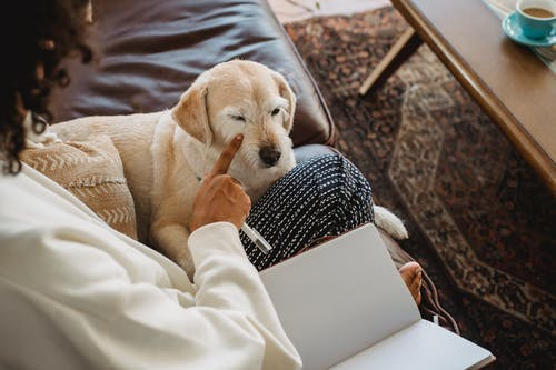 Faceless black lady sitting with notebook near dog