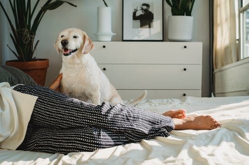 Dog resting on bed near anonymous black female