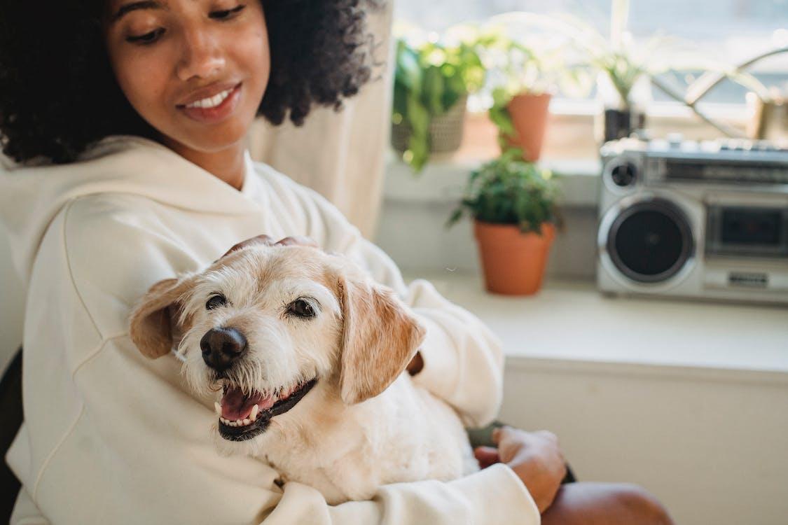 Crop woman hugging cute dog in room