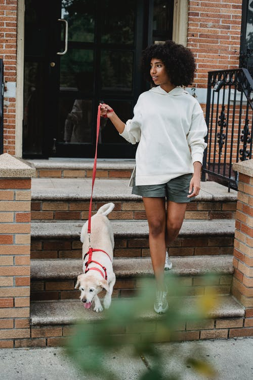 Full body of African American female in casual clothes holding leash while walking with obedient puppy