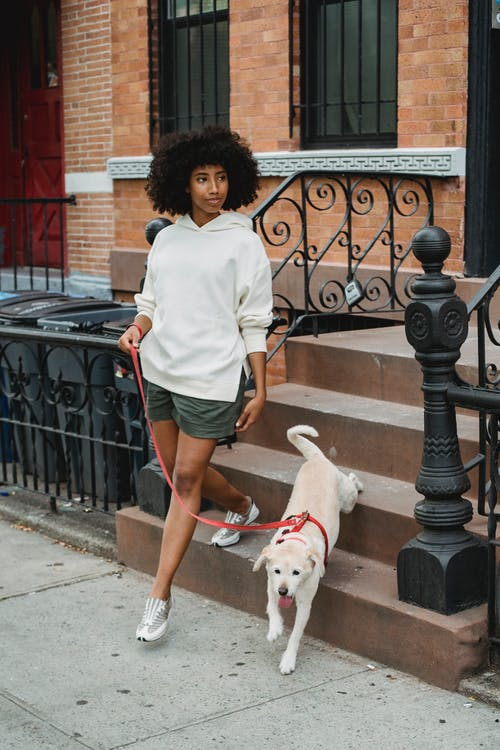 Full length of black female with Afro hairstyle holding leash while going for walk with obedient dog
