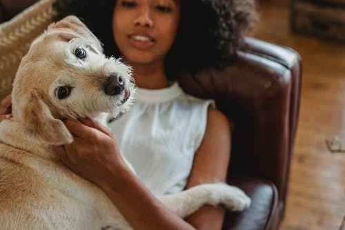 High angle of crop African American female owner relaxing on leather couch while embracing adorable puppy in living room