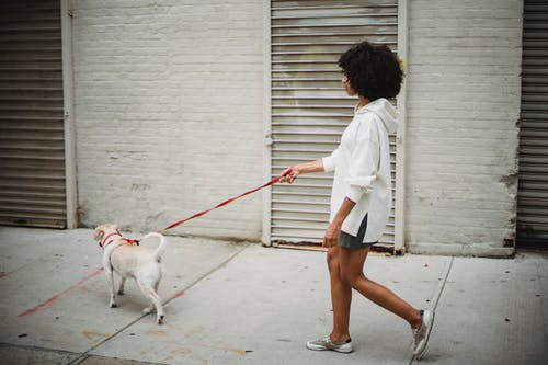 Side view of African American female in casual outfit strolling with obedient puppy on paved street