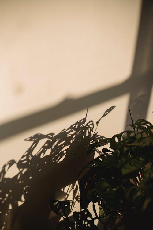 Cây Xanh Trong Phòng Dưới ánh Sáng Mặt Trời