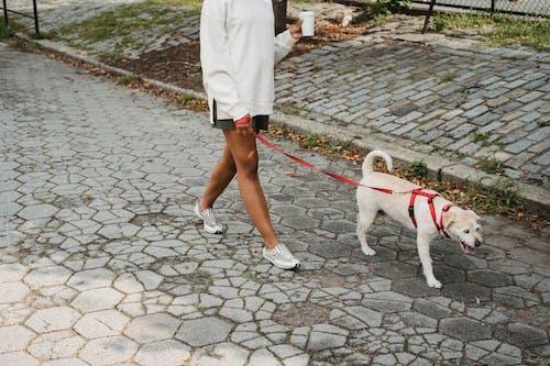 Người Phụ Nữ Không Thể Nhận Ra Với Cà Phê Mang đi Dạo Trên Phố Với Chú Chó đáng Yêu
