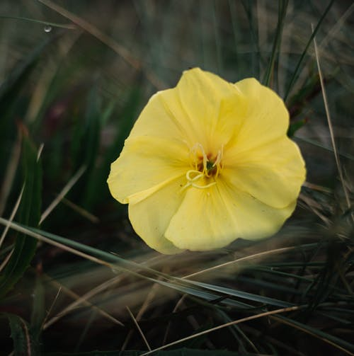 From above of bright blooming flower with gentle petals among grass in daylight