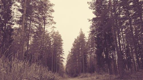 Безкоштовне стокове фото на тему «Вулиця, дерево, Природній»