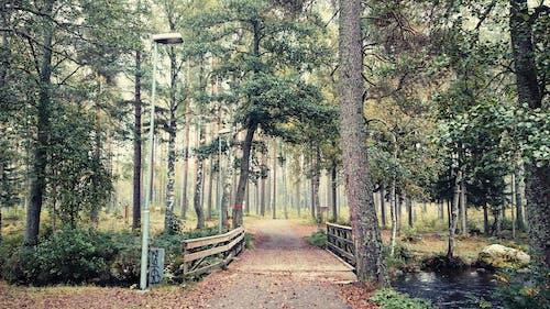 Безкоштовне стокове фото на тему «дерева, міст, Природа»