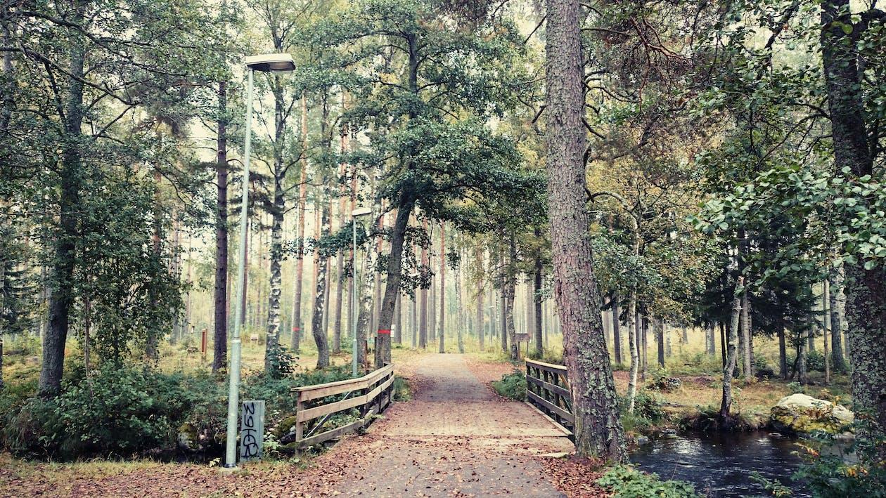 天性, 性質, 樹木 的 免費圖庫相片